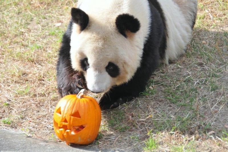 神戸 王子動物園 ハロウィン ハロウィーン 2018 イベント