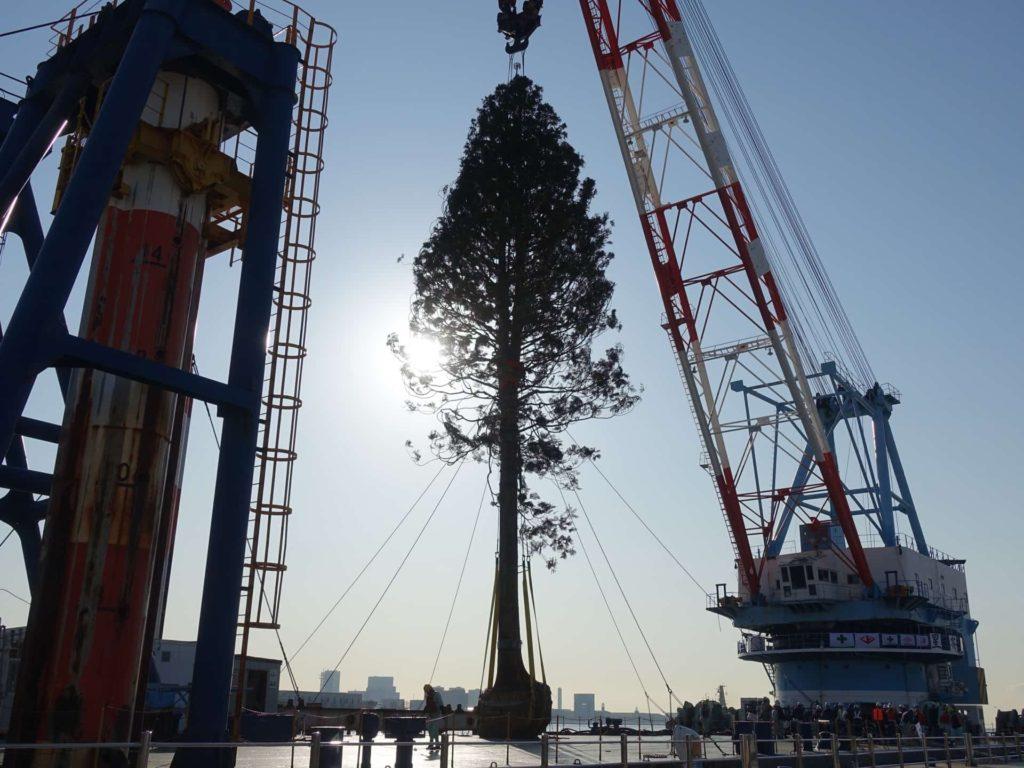 神戸 メリケンパーク 世界一のクリスマスツリー めざせ!世界一のクリスマスツリープロジェクト 植樹式