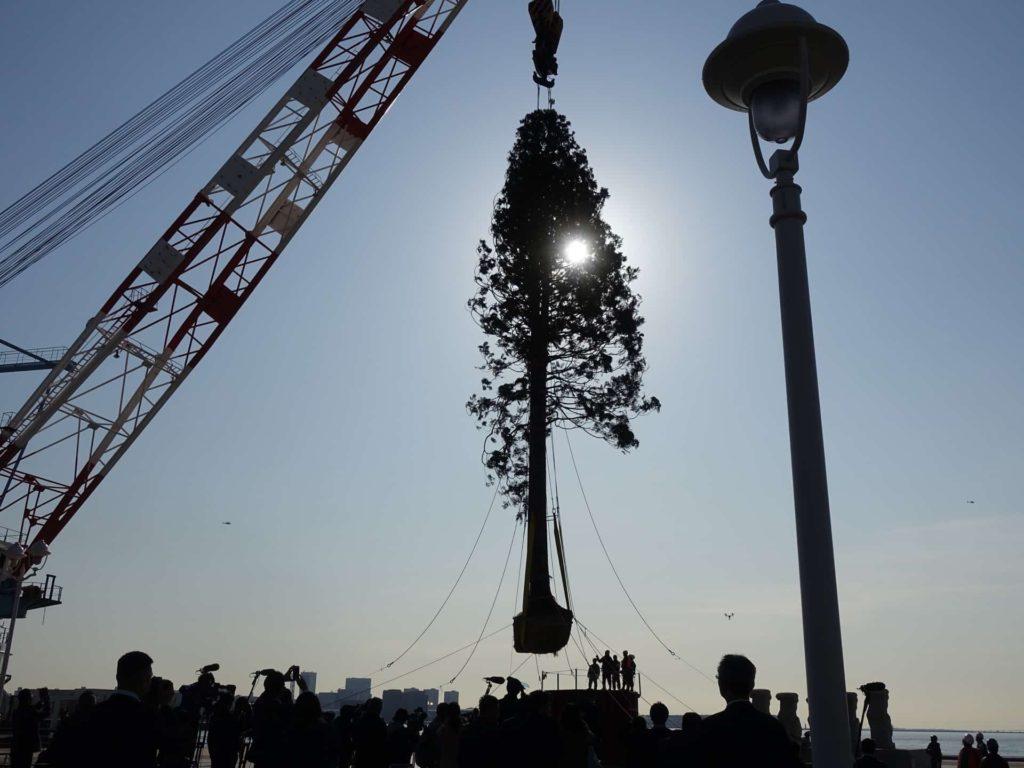 神戸 メリケンパーク 世界一のクリスマスツリー 植樹式