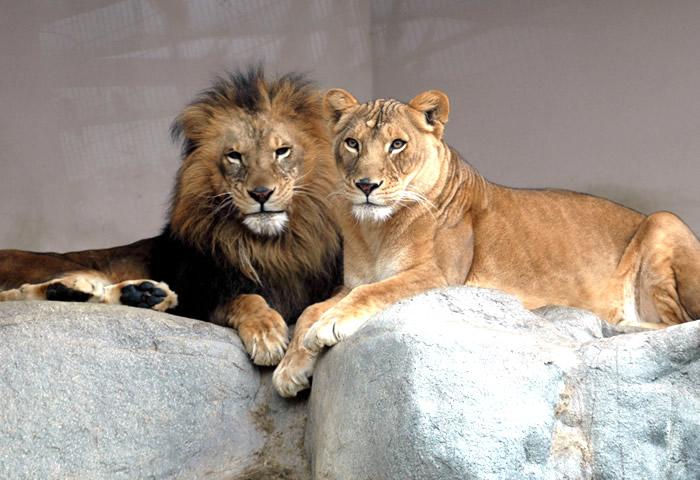 神戸 王子動物園
