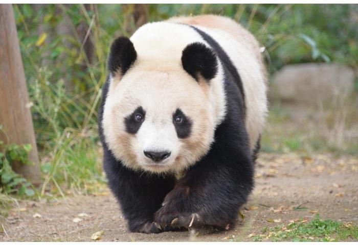 王子動物園 入園無料 入場料 無料 2019 開園記念日 アクセス 行き方 無料開放 無料の日