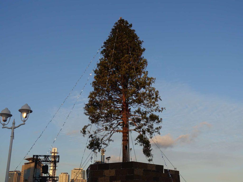 神戸 メリケンパーク 世界一のクリスマスツリー 点灯式 レポ