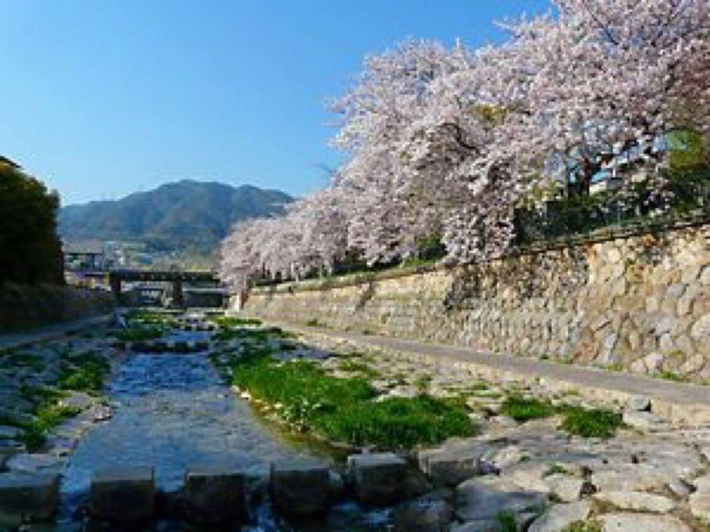2018 神戸 桜 花見 穴場 おすすめ スポット 都賀川 公園