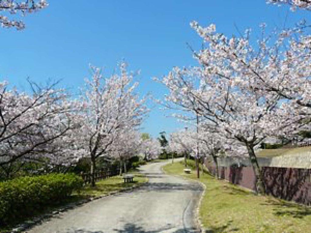 2020 神戸 桜 花見 穴場 おすすめ スポット 須磨浦公園