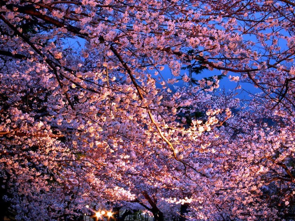 2018 神戸 桜 花見 穴場 おすすめ スポット 王子動物園 ライトアップ