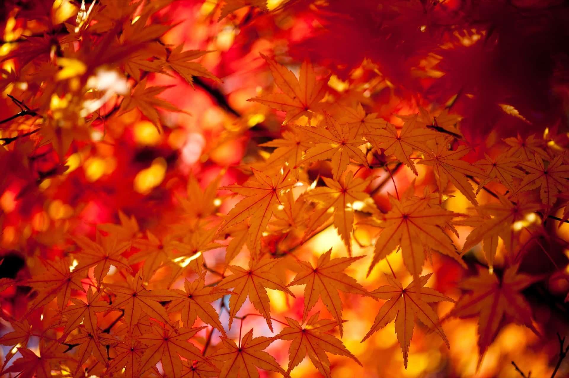 2017年版★神戸・六甲山の紅葉の名所・ライトアップ・見頃の時期まとめ