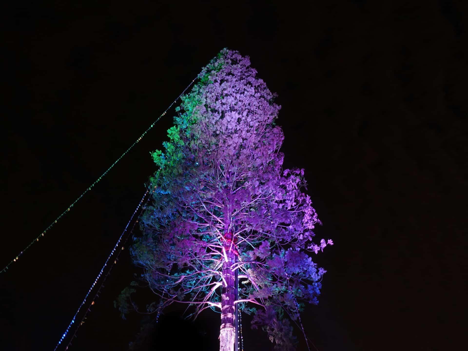 【レポ】槇原敬之さんのライブも!「世界一のクリスマスツリー」点灯式に行ってきたよ