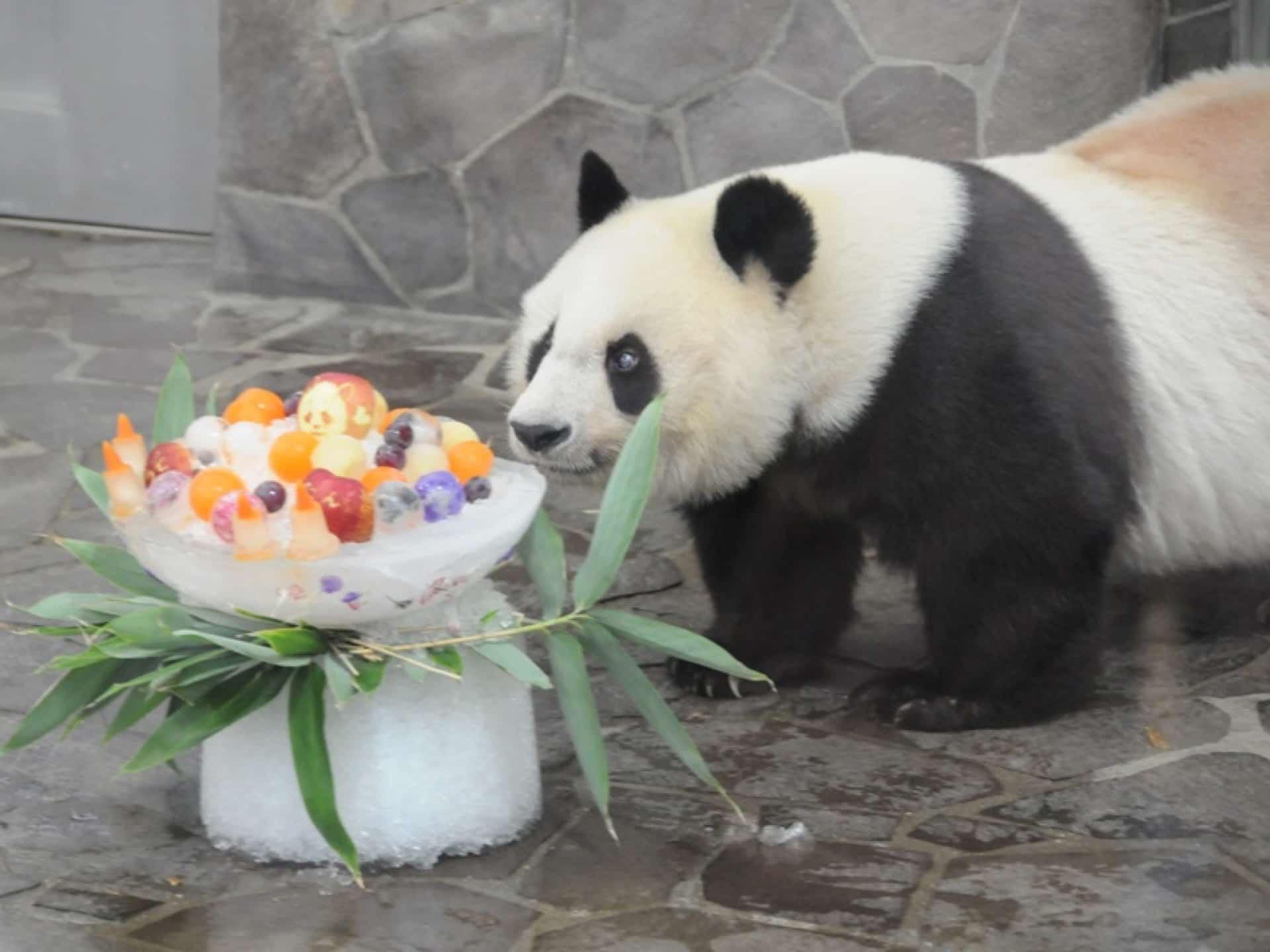 9月16日は王子動物園のパンダ「タンタン」23歳のバースデー!お誕生日会でお祝いしよう