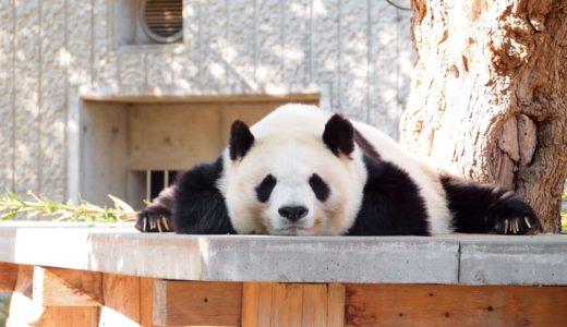 【2020年】開園記念日は王子動物園が入園無料!パンダ&コアラがいる日本唯一の動物園