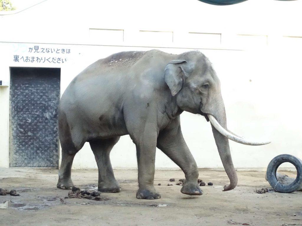 王子動物園 入園無料 入場料 無料 2020 開園記念日 いつ 3月21日 無料の日 無料開放