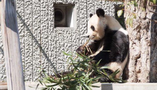 【5月6日まで臨時休園】王子動物園が無料開放中|新型コロナの影響で一部屋内施設閉鎖のため